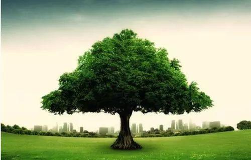 【雅思/PTE写作】大作文想不出观点?那就来一起种逻辑树吧!