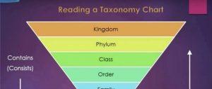 PTE本周超坑爹RL题 – taxonomy满分答案解析